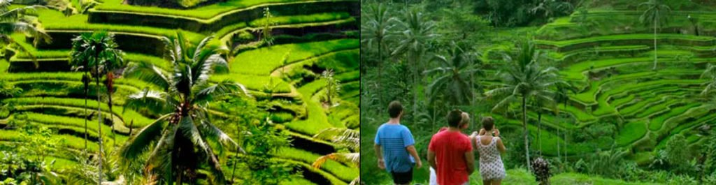 Photo of Tegalalang Rice Terrace - Kintamani private day tour