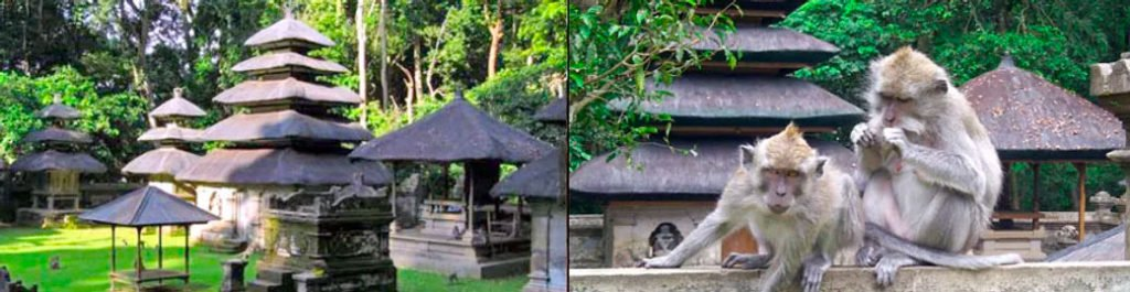 Photos of monkeys at Alas Kedaton - Tanah Lot Day Tour
