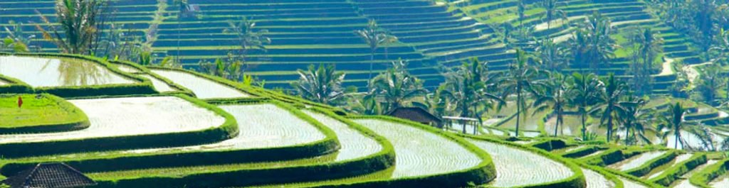 Photo of Jatiluwih Rice Fields Bali - Tanah Lot Day Tour